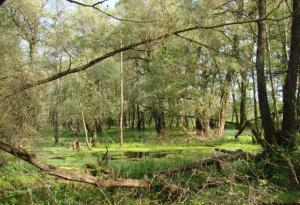 The waterlogged floodplain of the Bug River