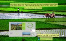World Wetlands Day 2014 Prezi Screenshot